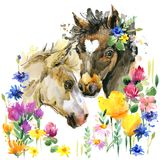 Cute foal watercolor illustration. farm animal