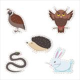 Cute Cartoon Forest Animals Stickers Collection. Cute forest animals stickers isolated on white background. Thick hazel grouse, brown owl, small hedgehog, fluffy Stock Photography