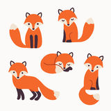 Cute fox collection Royalty Free Stock Photo