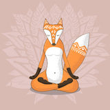 Cute fox meditates Royalty Free Stock Photography