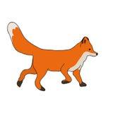 Cute fox run Stock Photography