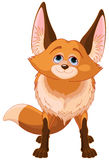 Cute Fox Stock Photos