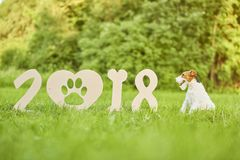 Adorable happy fox terrier dog at the park 2018 new year greetin Stock Images