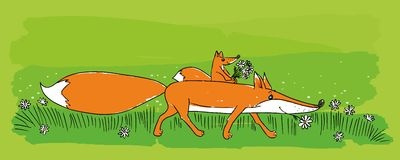 Cute foxes Stock Image