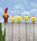 Cute free range cihcken mother with her chick kids, sitting on old wooden fence royalty free stock photography