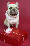 Cute french bulldog dress in santa claus Royalty Free Stock Photography