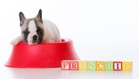 cute puppy in a food bowl royalty free stock photo