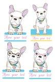 Cute french bulldog Royalty Free Stock Photos