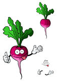 Cute fresh leafy radish vegetable Royalty Free Stock Images