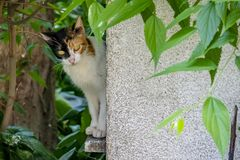Cute friend cats in nature. Close up cute friend cats in nature royalty free stock images