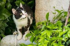 Cute friend cats in nature. Close up cute friend cats in nature stock images