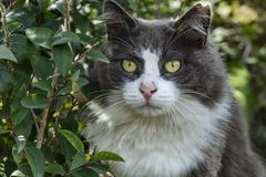 Cute friends cats in nature. Close up cute friends cats in nature royalty free stock image