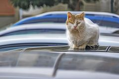 Cute friends cats in nature. Close up cute friends cats in nature stock images