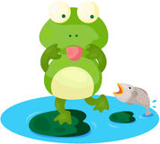 Cute  frog Stock Image