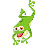 Cute frog jumping Stock Photo