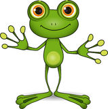 Cute frog. Standing cute green frog with big eyes Royalty Free Stock Photo
