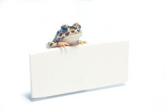 Cute frogwith card. Cute little frog standing with card with Royalty Free Stock Photo