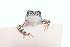 Cute frogwith card. Cute little frog standing with card with Royalty Free Stock Photos