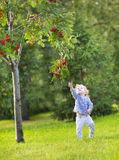 Cute funny baby girl running under a red berry tree Royalty Free Stock Image