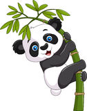 Cute funny baby panda hanging on a bamboo tree Stock Photo