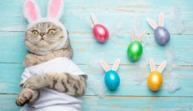 Cute funny beautiful cat with rabbit ears, Easter background with eggs. View from above. Easter background royalty free stock photos