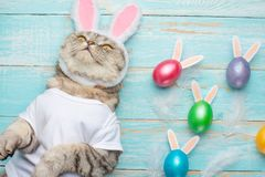 Cute funny beautiful cat with rabbit ears, Easter background with eggs. View from above. Easter background stock photos