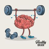 Cute and funny brain cartoon. Cute and funny brain lifitng weights cartoon vector illustration graphic design stock illustration