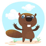 Cute funny cartoon vector beaver waving with his hands. Fluffy beaver character Stock Image