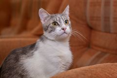 Cute cat at home. Funny cat. Cute funny cat at home royalty free stock photos
