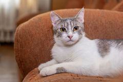 Cute cat at home. Funny cat. Cute funny cat at home stock images