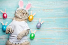 Cute funny cat with rabbit ears, easter background with eggs. Banner, top view.  stock photos