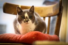 Cute funny cat sit on pillow chair close up photo royalty free stock photo