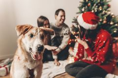 Cute funny dog looking in front and happy stylish family in fest Royalty Free Stock Image