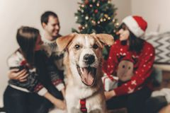 Cute funny dog looking in front and happy stylish family in fest Stock Images