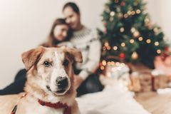 Cute funny dog looking in front and happy stylish family in fest Royalty Free Stock Photos