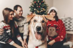 Cute funny dog looking in front and happy stylish family in fest Royalty Free Stock Images