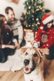 Cute funny dog looking in front and happy stylish family in fest Stock Photography