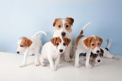 Cute funny dogs on color. Background royalty free stock photo