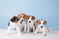 Cute funny dogs on. Color background royalty free stock images