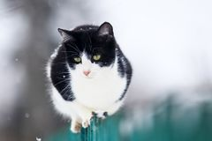 Cute funny domestic kitten sits on a wooden fence in the village in the garden during a snowfall and looks into the distance royalty free stock images