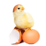Cute funny easter chick Royalty Free Stock Image