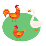 Cute, funny farm birds - rooster, hen, goose - on the pasture Stock Images