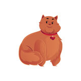 Cute and funny fat, chubby, fluffy red cat Royalty Free Stock Images