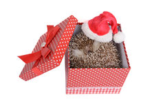 Cute funny gift. Royalty Free Stock Photos