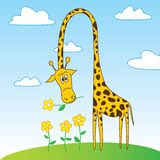 Cute Funny Giraffe Cartoon Character with Flower. Cartoon character of funny giraffe holding a flower in mouth. EPS8 vector illustration Royalty Free Stock Photos