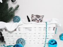 A cute kitten peers out of the basket. Stock Photography
