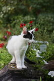 Cute funny kitten sitting near the flower bed Stock Image
