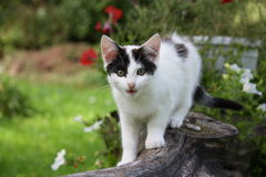 Cute funny kitten sitting near the flower bed Royalty Free Stock Photos