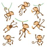 Cute funny monkeys Royalty Free Stock Photos