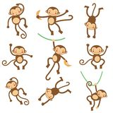Cute funny monkeys Stock Photo